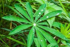 gräs raindrops Arkivbilder