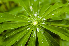 gräs raindrops Arkivbild