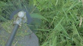 Gräs roterande snitt för elektriskt beskärareblad och filialer på platsen stock video