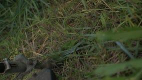 Gräs roterande snitt för elektriskt beskärareblad och filialer på platsen arkivfilmer