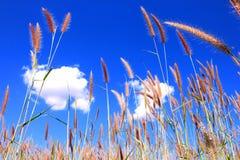 Gräs sätter in Royaltyfria Foton
