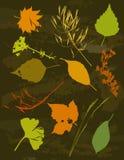 gräs silhouettes vektorn Royaltyfri Bild