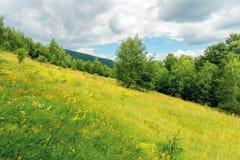 Gräs- skogglänta på kullen i sommar royaltyfri fotografi