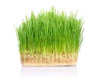 gräs smutsar Royaltyfria Bilder