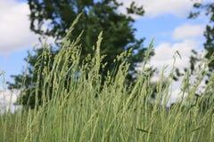 Gräs som blåser bland träd Royaltyfri Fotografi