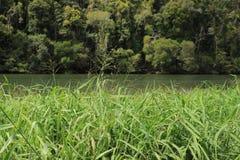 Gräs som förbiser floden arkivbild