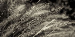 Gräs som glöder i morgonsolen Royaltyfri Foto