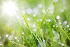 gräs som sparkling arkivfoto