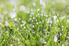 gräs som sparkling royaltyfri foto