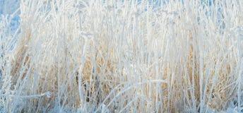 Gräs som täckas med frost och snö textur Royaltyfri Foto