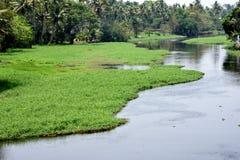 Gräs som täckas på floden Fotografering för Bildbyråer