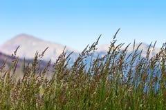 Gräs som växer i Colorado berg arkivbild