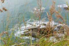 Gräs som växer på en kust royaltyfri fotografi