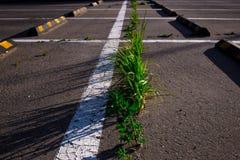 gräs som växer till och med asfalten i parkeringsplatsen i sommar royaltyfria bilder