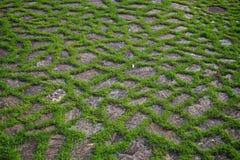 Gräs- stenar Arkivbilder