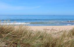Gräs- strand på Busselton västra Australien royaltyfri bild