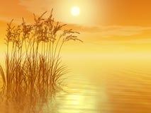 gräs sunset2 Fotografering för Bildbyråer