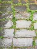 Gräs- tegelplatta Fotografering för Bildbyråer