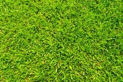 gräs textur Royaltyfria Bilder