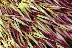 Gräs- textur och bakgrund Royaltyfri Bild
