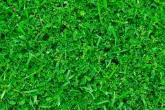 Gräs texturerar royaltyfri foto