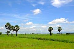 gräs thailand Arkivfoton