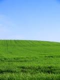 gräs- tomt fält royaltyfri bild