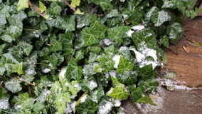 Gräs under regna snöslask i höst Arkivbilder