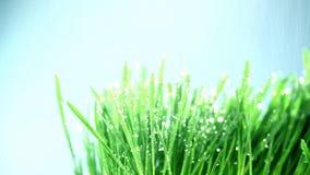 Gräs under regnet stock video