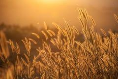 Gräs under solnedgång royaltyfri foto