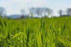 Gräs upp slut i ett fält Royaltyfria Bilder