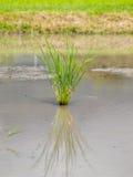Gräs växer Arkivfoton