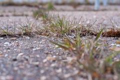 Gräs växer på asfalt royaltyfria bilder