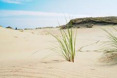 Gräs växer på sanderna av den spottade Curonianen slinga av en man som lämnar i dyerna royaltyfri fotografi