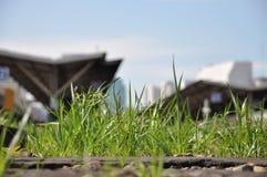Gräs växer stadsdag Arkivfoton