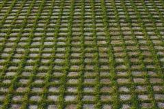 Gräs växer till och med tegelplattorna Royaltyfri Bild