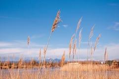 Gräs vasser på stranden mot blå himmel royaltyfri fotografi