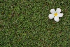 Gräs version7 Fotografering för Bildbyråer