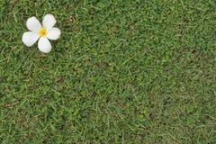 Gräs version8 Royaltyfria Bilder