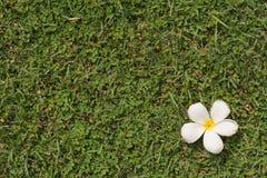 Gräs version6 Arkivbild