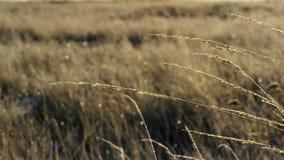 Gräs vissnas och frysas i vintern, nordliga Australien fotografering för bildbyråer