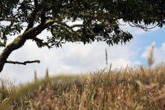 gräs wild Arkivbild