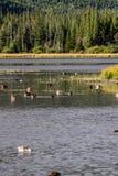 Gräsand nationalpark på för Vermillion sjöar, Banff, Alberta, Kanada Arkivbild
