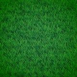 Gräsbakgrund Arkivbilder