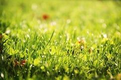 Gräsbakgrund Arkivfoton
