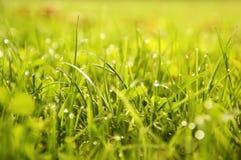 Gräsbakgrund Royaltyfri Fotografi