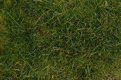 Gräsbakgrund från bästa sikt Royaltyfri Bild