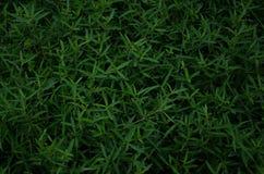Gräsbakgrund, gräs Royaltyfri Foto