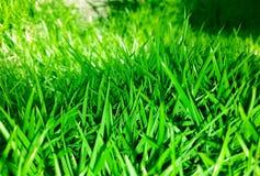 Gräsbakgrund i gräsplan Royaltyfria Foton