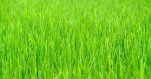 Gräsbakgrund med droppe av dagg Arkivbild